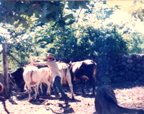 Sabas Flores working on the farm